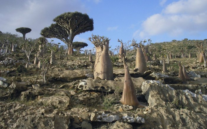 Keindahan Kepulauan Socorta.jpg